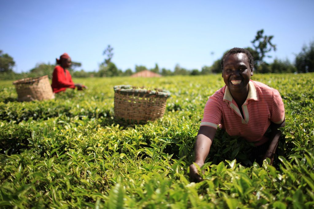 Jackeline Nyangaresi – Nyamira (Tea and Dairy Farming)